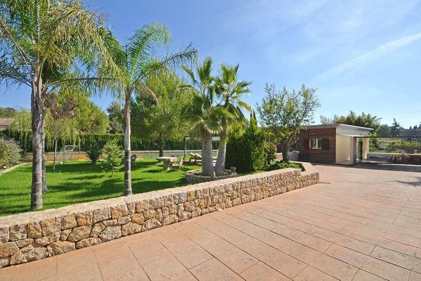 Terrasse und Palmen